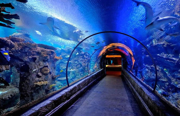 Shark Reef Aquarium at Mandalay Bay in USA