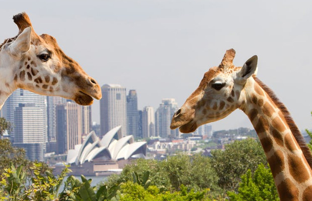 Taronga Zoo Sydney in Australia